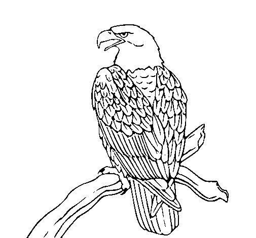 Coloriage de Aigle sur une branche pour Colorier