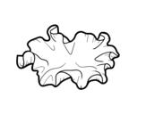 <span class='hidden-xs'>Coloriage de </span>Champignon oreille du diable à colorier