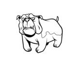 <span class='hidden-xs'>Coloriage de </span>Chien bulldog anglais à colorier
