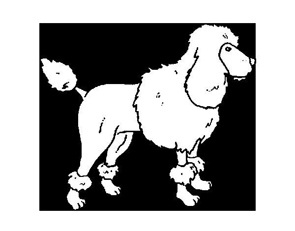 Coloriage de chien caniche pour colorier - Dessin caniche ...