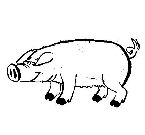 Coloriage de Cochon avec les ongles noirs pour Colorier