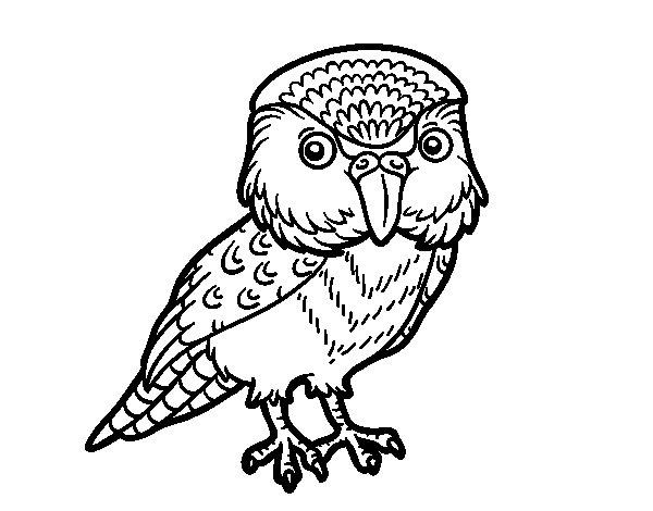 Coloriage de Kakapo pour Colorier