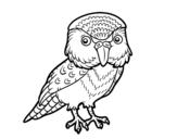 <span class='hidden-xs'>Coloriage de </span>Kakapo à colorier
