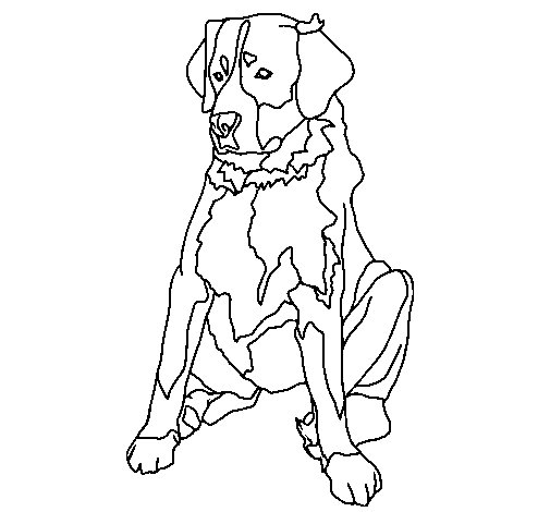 Coloriage de labrador pour colorier - Coloriage labrador ...
