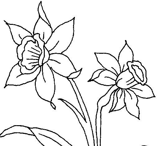coloriage de orchidée pour colorier - coloritou