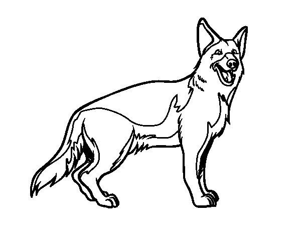 Coloriage de un berger allemand pour colorier - Dessin de chien berger allemand ...
