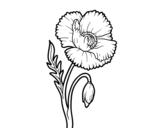<span class='hidden-xs'>Coloriage de </span>Une fleur de coquelicot à colorier