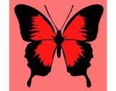 Papillon à ailes noires