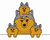 Famille Husky
