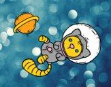 Chaton astronaute