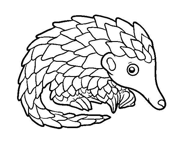 coloriage pangolin